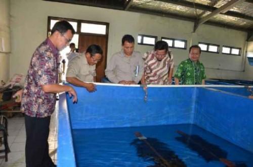Harga Jual Ikan Lele Di Pasar Rau Dibawah Standar
