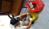 Penyelundupan 14 Ton Kulit Sapi ke Jakarta Digagalkan