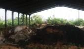 Warga Desa Mangunreja Mengeluh Pembuangan Limbah Domestik  Dan B3 Di Lahan Milik PT Satmarindo